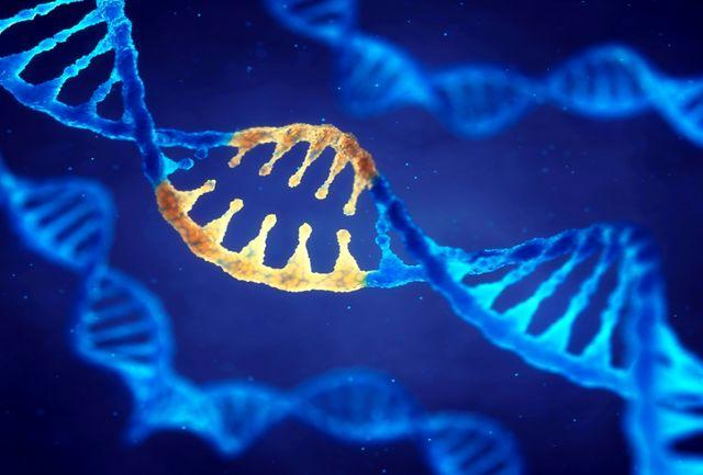 پیگیری برای اجرایی شدن برنامه ژنتیک اجتماعی در سراسر استان