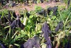 هشدار دو سازمان به کشاورزان درباره خسارت سرما!