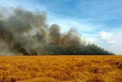 ۶۰ هکتار از اراضی تالاب هامون سوخت