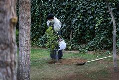 رهبر انقلاب اسلامی دو اصله نهال میوه غرس کردند