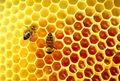 کوچ بیش از یک هزار کندو زنبور عسل