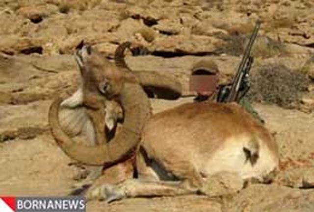 محکومیت دو مجرم حیوان آزار به انجام 500 ساعت خدمت رایگان محیط زیستی