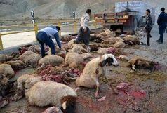 تلف شدن 30 راس گوسفند در تصادف جاده ای خراسان شمالی