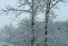 بارش برف مناطق کوهستانی گیلان را سفیدپوش کرد