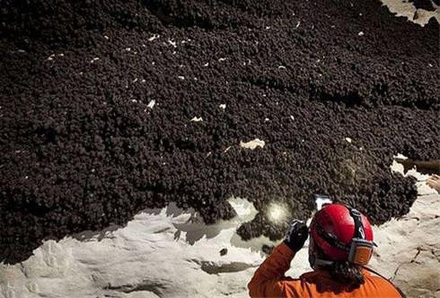 غار خفاش دهلران با بیش از 30 هزار خفاش