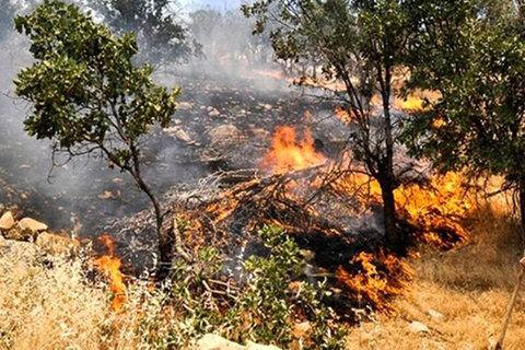 ۳۵ هزار هکتار مناطق جنگلی استان از لحاظ آتشسوزی در وضعیت بحرانی قرار دارد