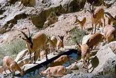 شهرستان هوراند منطقه شکار ممنوع اعلام شد