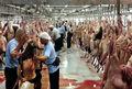 گوشتهای قربانی حج به ایران برگردانده نمیشود