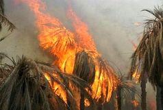 ۱۲۰ اصله نخل خرما در بخش بزمان طعمه حریق شد