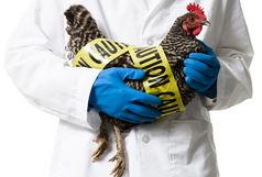 آنفلوآنزای فوق حاد پرندگان تهدیدی برای چهارمحال و بختیاری
