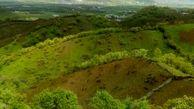 زراعت چوب در ۶۰۰ هکتار از اراضی ملی