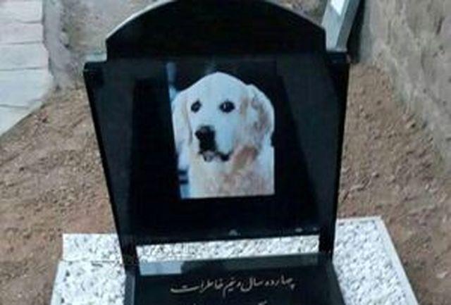 شناسایی و دستگیری عاملان دفن سگ در مسجد