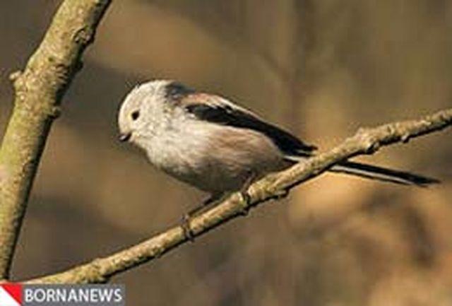 گزارشی عجیب از پرندهای که لانه خود را مخفی میکند