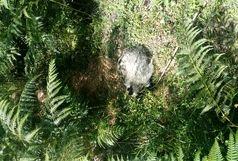 یک قطعه گورکن در دامان طبیعت رهاسازی شد