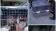انتقال سگ ماده بهمراه ۴ توله محبوس شده توسط آتش نشانان شهر باران