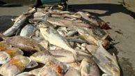 5 تن ماهی خوراکی در سیریک معدوم شد