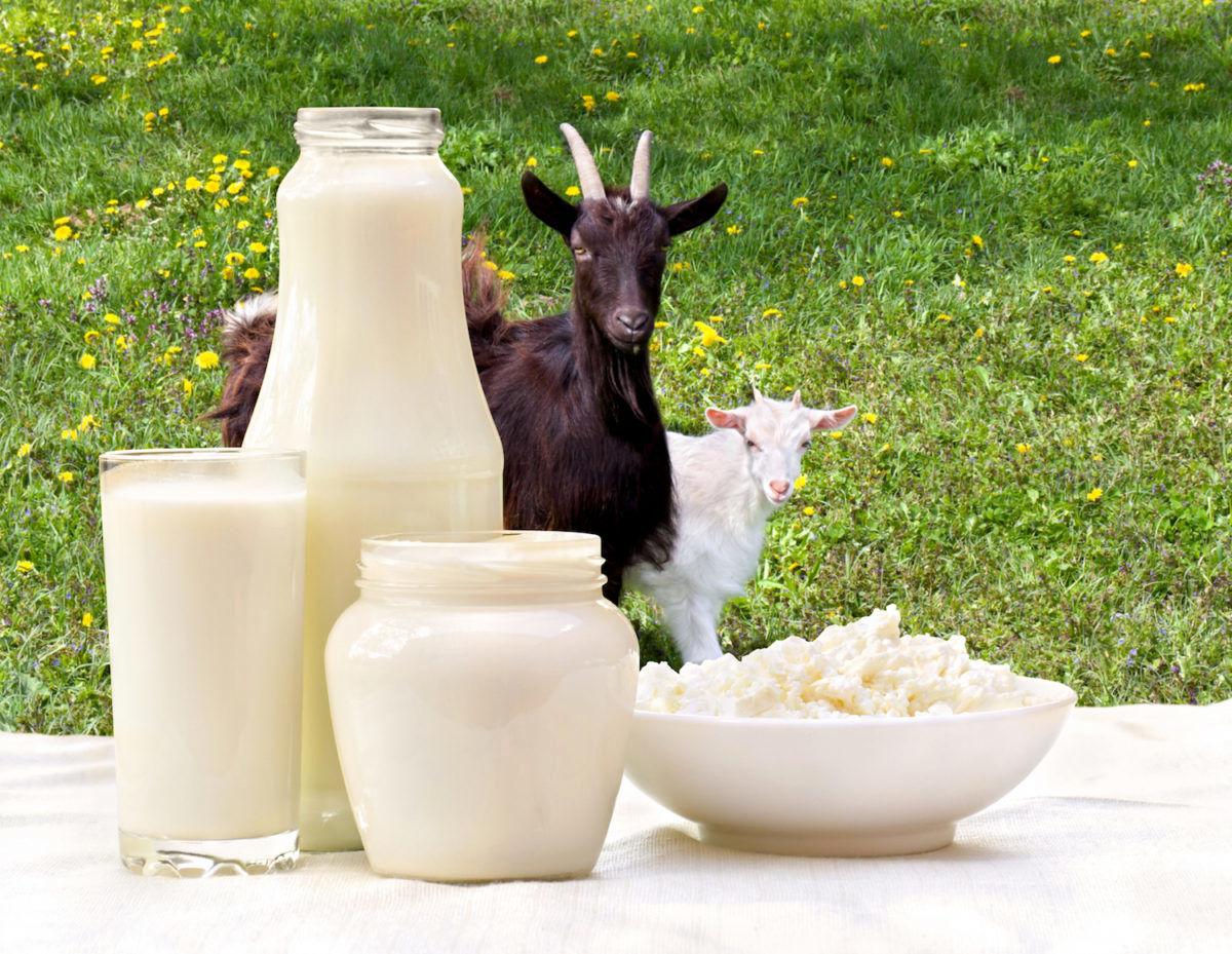 این خوراکی ها را می توانید جایگزین خوردن ( شیر ) کنید!