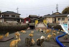 جزیره اختصاصی گربهها + عکس