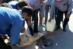 مشارکت  ۱,۶ میلیارد تومانی مردم استان خراسان شمالی در عید قربان امسال