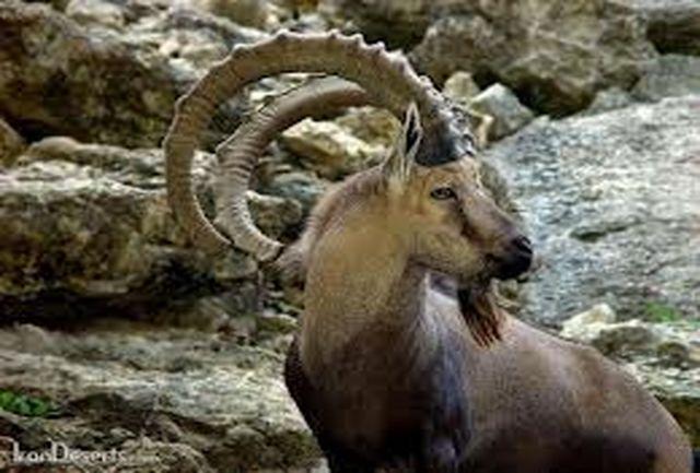 مناطق شکارگاه آزاد خراسان شمالی آماده واگذاری به بخش خصوصی