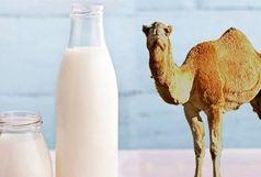 تب مالت در کمین مصرف کنندگان شیر شتر است