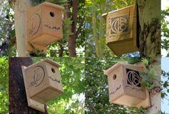 چهارباغ خانه امن پرندگان شد/نصب لانه برای پرندگان در چهارباغ عباسی