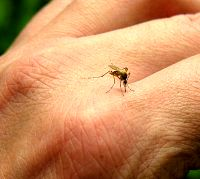 آیا واقعا ویروس کرونا توسط نیش پشه نیز منتقل میشود؟