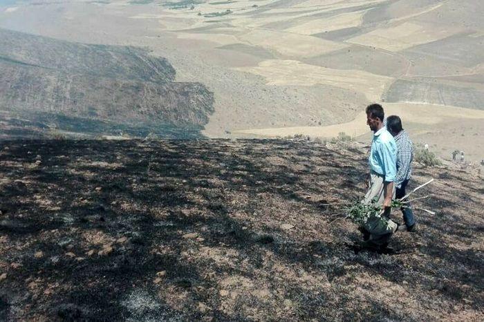 مهار شدن آتش سوزی جنگلهای کهگیلویه