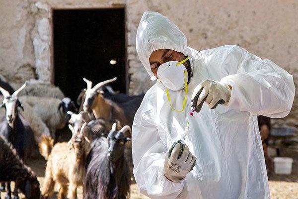 آغاز واکسیناسیون آبله در شهرستان قزوین