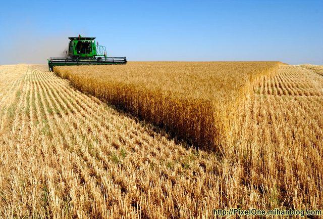 تمام محصول گندم تولیدی خود را فقط به مراکز خرید دولتی تحویل دهید