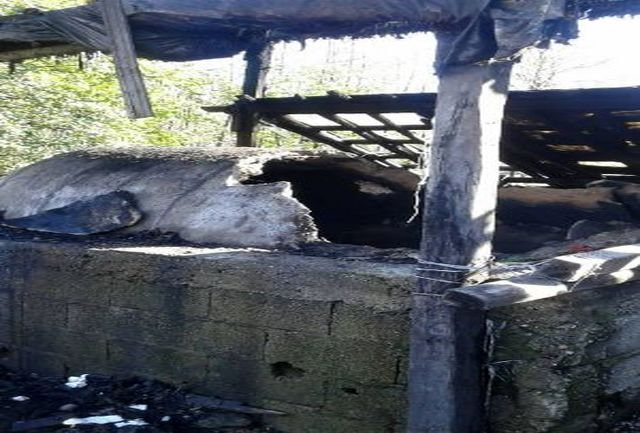 6 کوره ذغال سنتی در شهرستان صومعه سرا تخریب شد