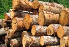کشف 62 تن چوب جنگلی قاچاق در شفت