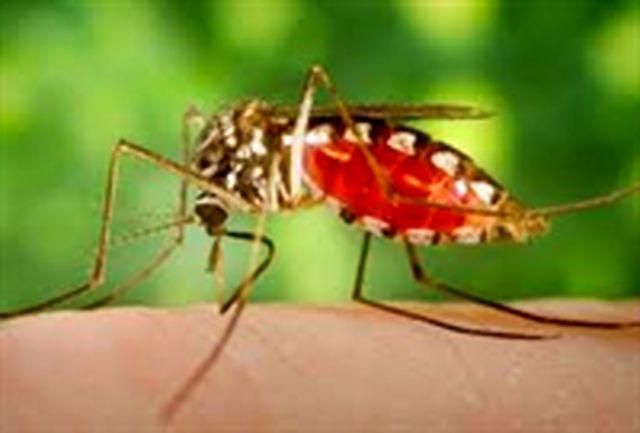 میزان مبتلایان به مالاریا در سیستان و بلوچستان به 287 مورد کاهش پیدا کرده است