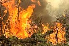 آتش جنگل های بخش الوار دوباره زبانه کشید