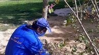 بیش از ۵۶۰ مورد طعمه گذاری در بوستانهای جنوب شهر