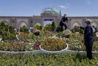 مشهد در روز میلاد امام رضا (علیه السلام)