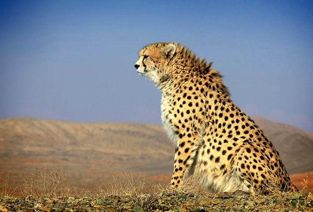 ضرورت پیش بینی ردیفی در بودجه 98 برای حفاظت از گونه های نادر جانوری