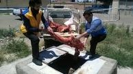 معدوم کردن ۷ تن گوشت آلوده در خراسان جنوبی