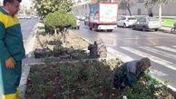آغاز عملیات واکاری چمن و کاشت گلهای فصلی در قرچک
