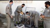 کشف و ضبط 45 قطعه انواع مرغابی در شفت