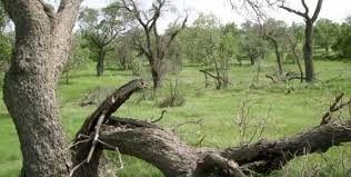 حال جنگلهای زاگرس اصلا خوب نیست
