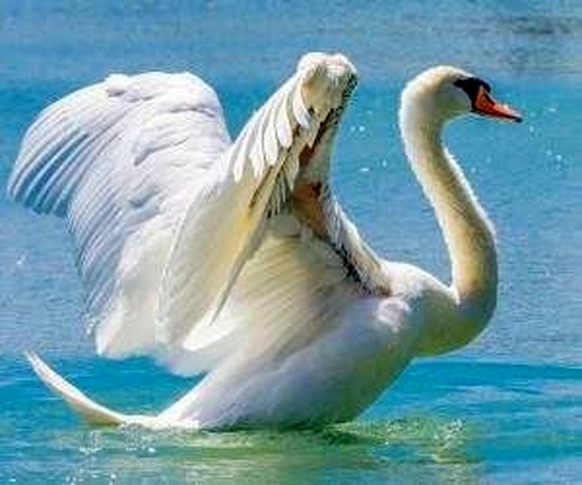 کدام پرندگان قادر به مرگ انسان ها هستند؟!