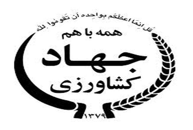 برداشت 84 هزار تن ذرت سیلویی از مزارع زنجان