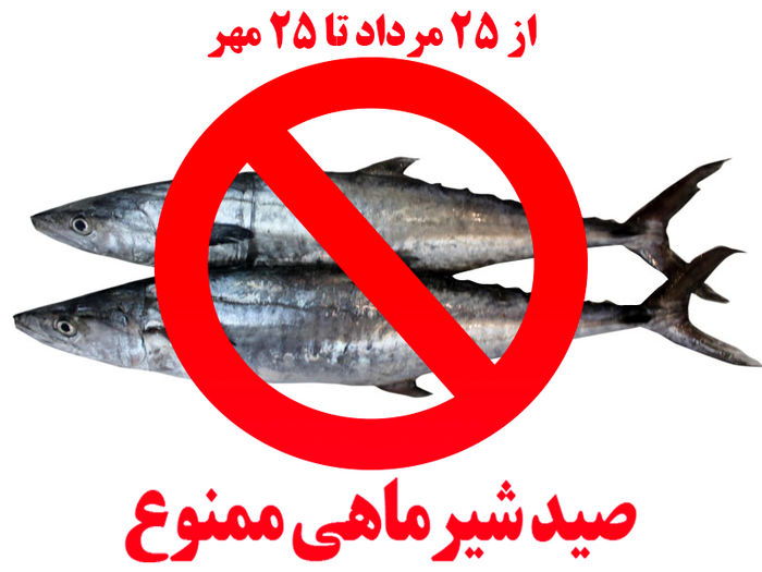 ممنوعیت صید ماهی شیر به روش گوشگیر از 25مرداد به مدت شصت روز