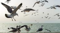 سفر به «جزایر پرندگان» در رسانه ملی