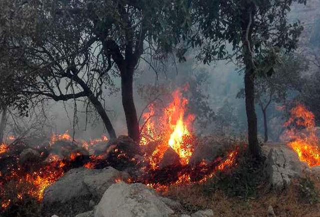 آتش سوزی بیش از ۱۰۰هکتار از جنگلهای منطقه حفاظت شده دنا