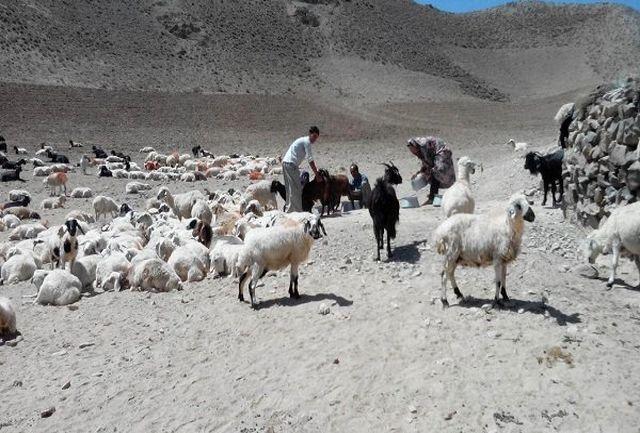 ۲۷ هزار تن علوفه و خوراک دام بین عشایر خراسان جنوبی توزیع شد