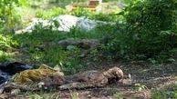 کشف مزرعهای از اجساد برهنه انسان+ عکس