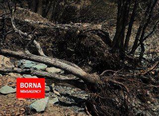 قلع و قمع درختان به بهانه ساخت اکوپارک+ فیلم