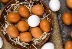 قیمت تخم مرغ در مرغداری ها 12000 تومان و برای مصرف کننده 14500 تومان
